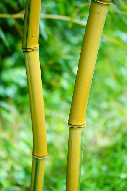 gold-bamboo-tube-474264_640