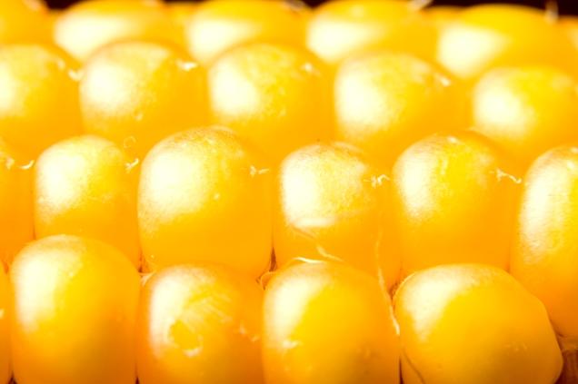 freshly harvested corn close up