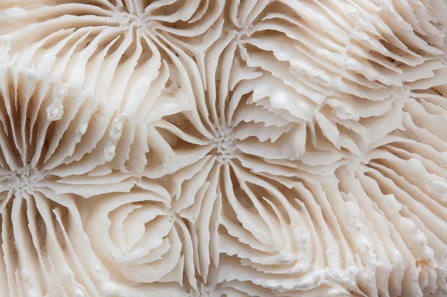 brain-coral-200792_640