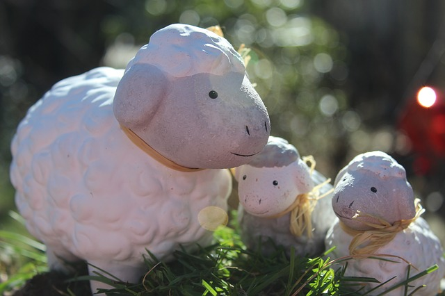 sheep-586374_640