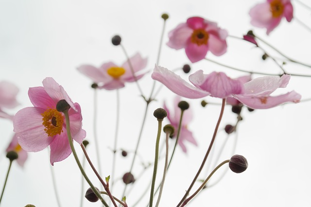 flower-215565_640