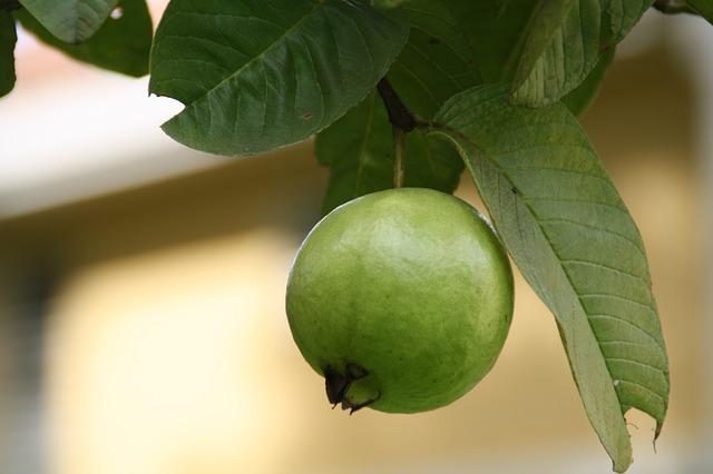 guava-188440_640