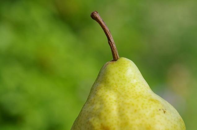 pear-351333_640