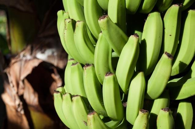 bananas-571544_640