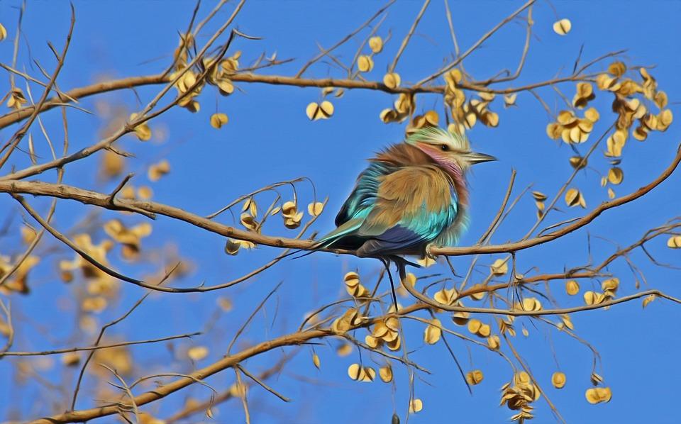 bird-515031_960_720
