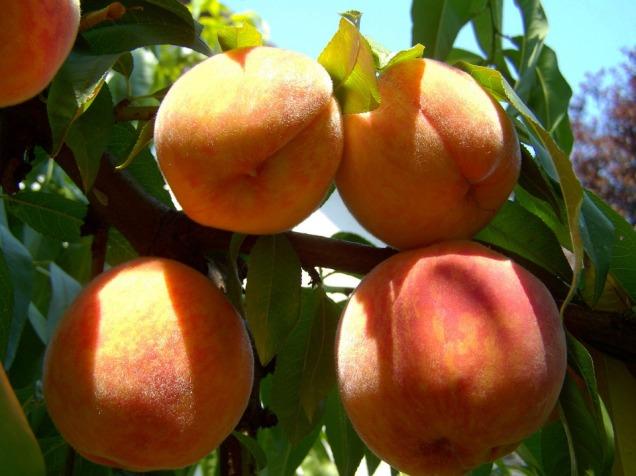 peach-863349_960_720