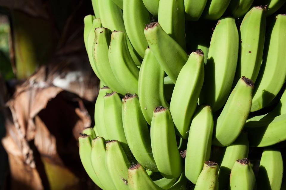 bananas-571544_960_720