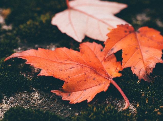 leaves-1030816_960_720